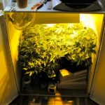 Best Small Grow Box