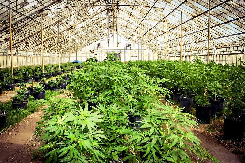 Best Grow Bags for Marijuana